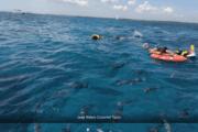 Snorkel tour Palancar y Colombia, El Cielo Cozumel